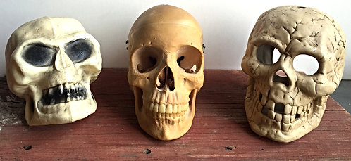 Skeleton Skull Model