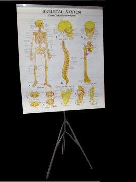 Skeletal System Poster and Frame