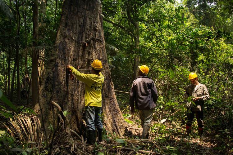 manejo sustentavel madeira
