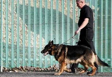 canine patrol.jpg