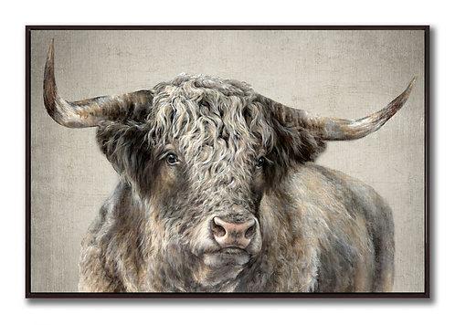 Kyloe Bull (PAY NO TAX)