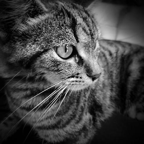 Cats Station 05.jpg