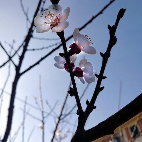 first steps of spring III.jpg