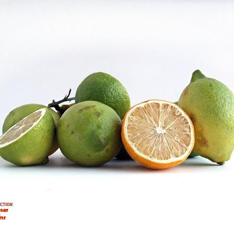 lemons 00.jpg