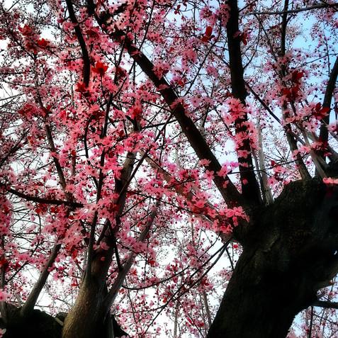 first steps of spring VI.jpg