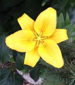 Yellow Burst