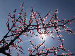 Branching Beauty