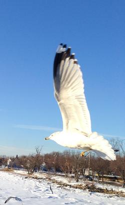 Take Flight