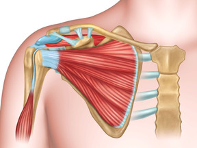 Functional Anatomy of the Shoulder and its Pathological Changes