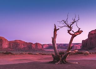 Desert Adv 6-12.png