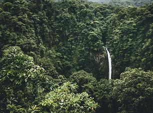 Jungle Int 10-13.png