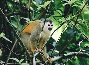 Jungle Beg 5-9.png