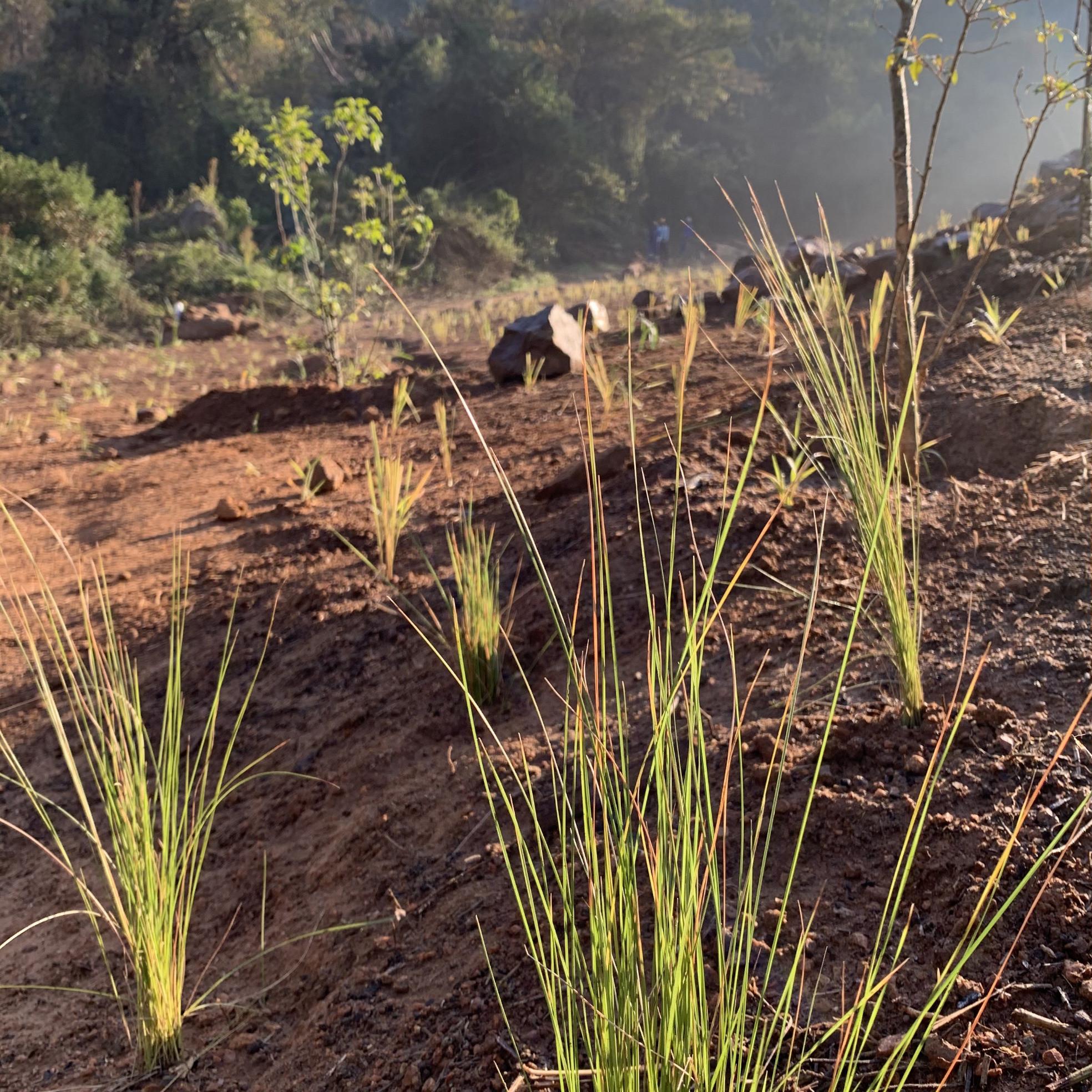 Repair of Damaged Natural Areas