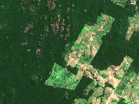 Indigenous groups sue French retailer Casino for involvement in cattle ranching deforestation