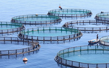 Una provincia argentina prohíbe la cría de salmón por razones ambientales