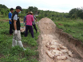 Thailand registers the emergence of two zoonotic outbreaks
