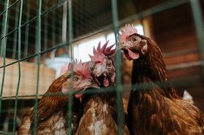 BNP Paribas seña ruptura con las peores prácticas de la ganadería industrial
