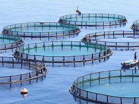 Argentinian province bans salmon farming due to environmental concerns