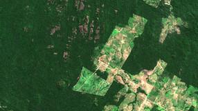 Indígenas demandan al Grupo Casino por deforestación ganadera