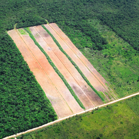 Carne vendida por Grupo Éxito proviene de deforestación ilegal, revela investigación