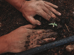Para alimentar 10 bilhões de pessoas até 2050, relatório recomenda maior consumo de vegetais
