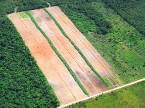 Meat sold by Grupo Éxito comes from illegal deforestation, investigation reveals