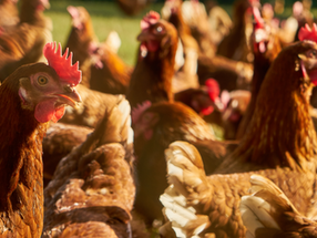 The European Union sets animal welfare as condition for trade with Mercosur