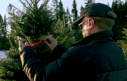 best places to order christmas trees online hilltop christmas tree farms - Hilltop Christmas