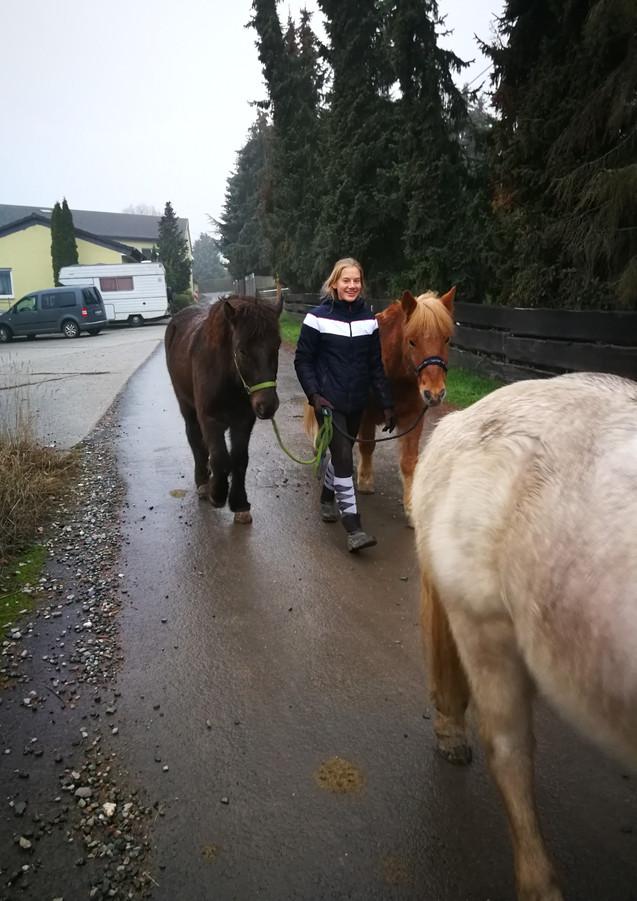 Fabienne bringt die Wallache in ihr neues Zuhause