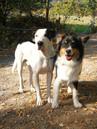 Bo und sein bester Freund Finn