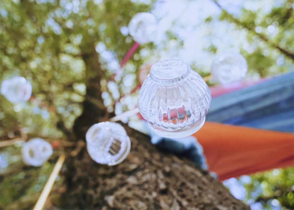 lampiony na drzewach.jpg