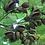 Thumbnail: Coques de paulwonia, perle de culture, agate    collier