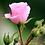 Thumbnail: Rose, agate, rubis, tourmaline    sautoir