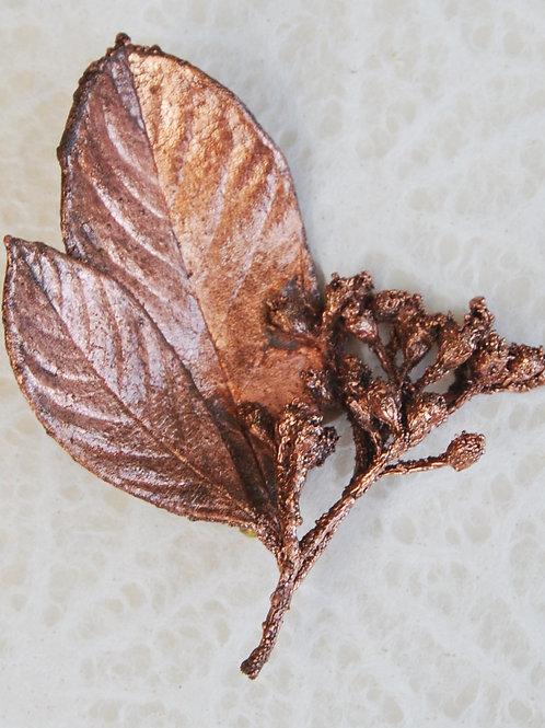 Branche de cotoneaster    broche