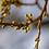 Thumbnail: Bourgeons de chêne et agate ananas   broche