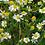 Thumbnail: Fleur de camomille, pâquerette   broche