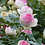 Thumbnail: Feuilles de rosier bouton de rose, tourmaline, agate, péridot   broche