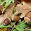 Thumbnail: Pâquerettes, plume, agate, pierre de lune   collier