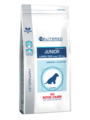 Pediatric Junior Large Dog