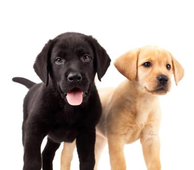 Puppy-School-Northcote-Vet-e145154615734