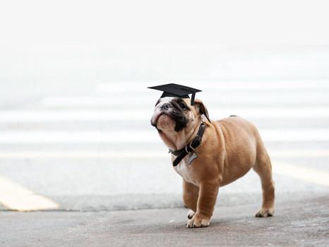 puppy-school-hero-background-1.jpg