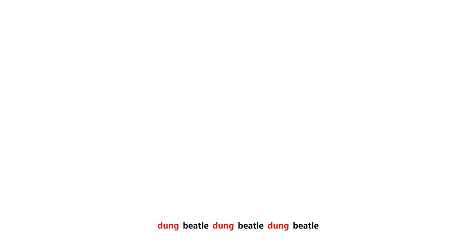dung_beatle, variable size, digital print on paper
