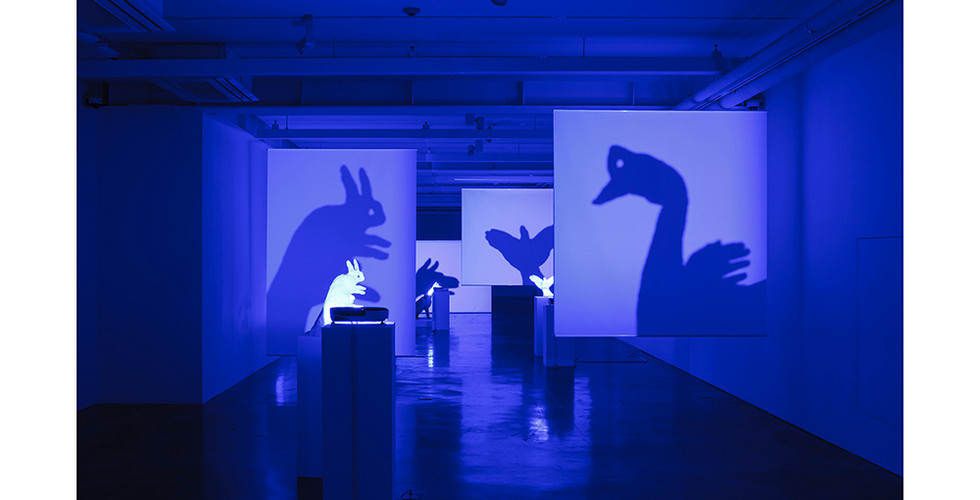 Projected Specimen, 2014, stuffed animal, projector, screen, various dimensions
