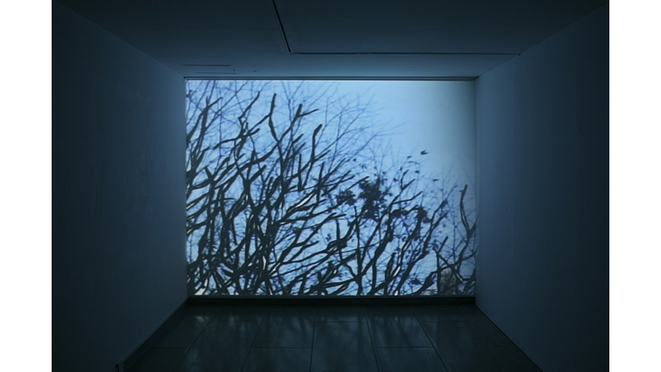 Moon, Kyung-Won, Genealogical Tree, 2007, media installation, 1 LCD projector, 1 DVD player, 1 amplifier, speaker, variable dimension