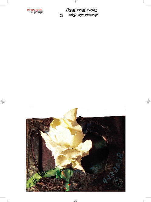 Weisse Rose Postkarte