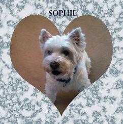 Andrea sophie dog - coaster.jpg