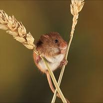 Mice Coaster.jpg
