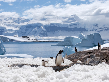 What not to miss in Antarctica!