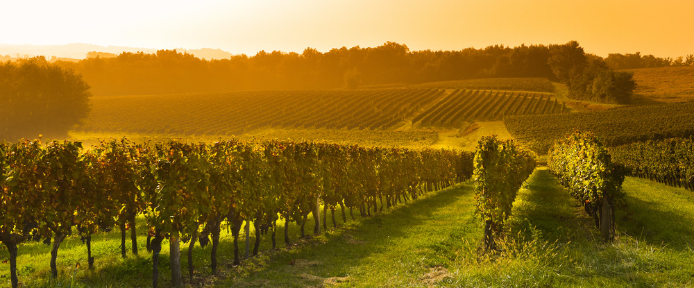 Bordeaux, French wine