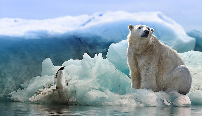 polar-bear-3277930_1920 image by Papafox